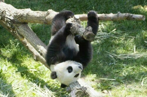 Reverse Panda, Google has surprised the online community